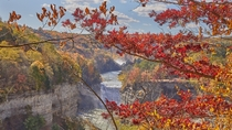 Letchworth through the Maples
