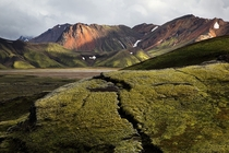 Lichen-covered rocks in Landmannalaugar Iceland  by John Freeman