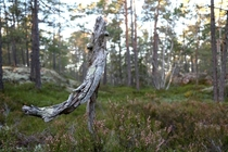Life and Death in a Swedish forest