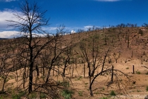 Life is always making a comeback One year after the Royal Gorge Fire in  Near Canon City Colorado