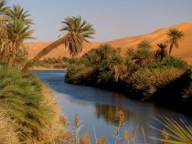 Life surrounding a lake in the Libyan Desert