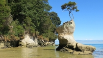 Life uh finds a way in Abel Tasman National Park New Zealand