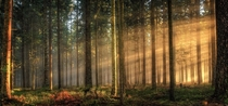 Light bursting through the fog in the black forest southern Germany
