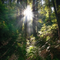 Light in the forest near Leggett California  kathryn_dyer