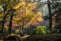 Light streaming through the fall leaves on Miyajima Island Japan  crossposted from rJapanPics photo by ualaijmw
