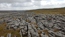 Limestone Pavements in Malham Yorkshire