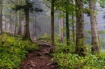 Lingering fog in the forest - Val de Travers Switzerland