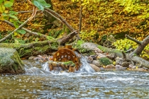 Little water wheel in the Nebel river Mecklenburg  Germany
