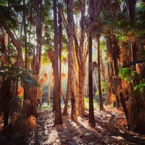 Littoral rainforest in the golden light of late afternoon Arakoon NSW Australia oc x