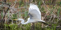 Live life with no regrets and plenty of egrets