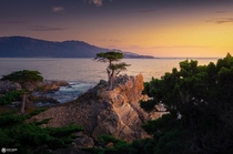 Lone cypress sunsetreally loved the soft light hitting this tree during our west USA road trip