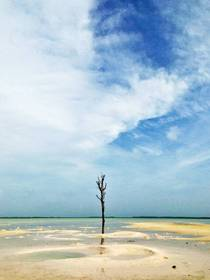 Lone tree at low tide The Bahamas