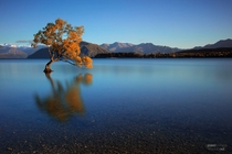 Lone tree in Lake Wanaka NZ  by Jerry Enerva