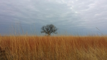 Lone tree on the Oklahoma plains