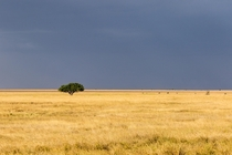 Lone tree on the Serengeti