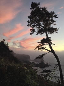 Lone tree over rocky shore at sunset in Humboldt County CA