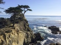 Lone Tree Pebble Beach CA