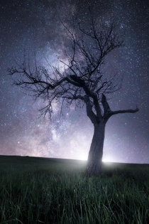 Lone tree under the Milky Way in southern Germany