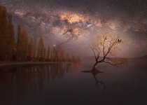 Lone tree under the Milky Way in Wanaka New Zealand