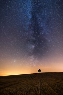 Lone Tree Under The Stars