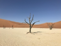 Lonely Ancient Trees Namibia