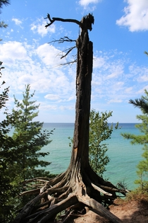 Lonely dead tree at Pictured Rocks Upper Michigan