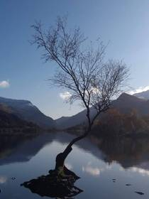 Lonely tree at Padarn this morning OC Moto G