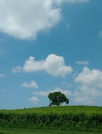 Lonely tree in a field Wyomissing Pa OC x