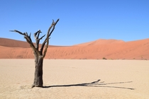 Lonely tree in Deadvlei Namibia  x