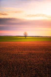 Lonely tree in the middle of a crop field Ontario Canada