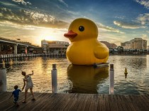 Look Theres a giant rubber ducky in Sydney Harbor