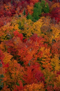 Looking down on vibrant fall colors near Lusten Minnesota