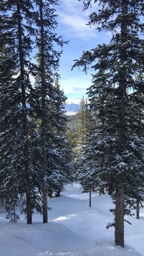 Looking down through the trees at Keystone CO
