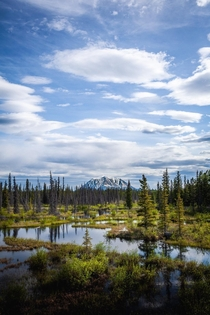 Looking for moose The Yukon Canada OC x