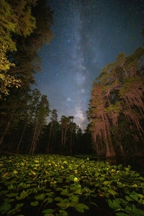 Looking out at the stars from inside the Okefenokee National Wildlife Refuge Stephen C Foster State Park sits inside the Refuge it was designated as an International Dark Sky Park a few years ago Its one of the best places in the Southeast for stargazing