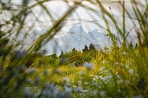 Looking through the weeds at Grand Teets in Grand Teton National Park OC  daltonjohnsonmedia
