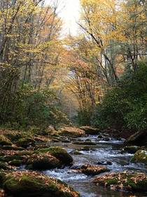 Looking upstream in the Great Smoky Mountains NC in autumn