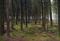 Lost in a Forest Co Wicklow Ireland