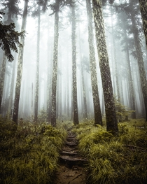 Lost in Oregons fantasy forest
