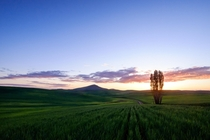 Lots of Photos of Cascade Mountains Here  But the Pacific Northwest has Plenty of Other Gorgeous Landscapes This is Sunset near Steptoe Butte in the Palouse Region of eastern Washington
