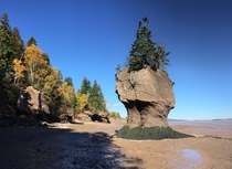 Low Tide at Hopewell Rocks New Brunswick Canada