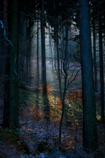 Lower Siesia Poland - Beautiful forest light by Marcin Gwozdz
