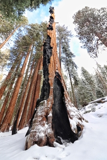 Lucked out with a sunny day after a winter storm Sequoia National Parkig-Andrew_Calder for more pics