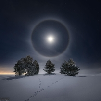 Lunar Halo over snowy trees in stersund Sweden Gran Strand