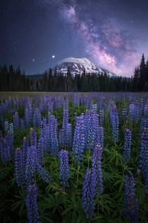 Lupine Nights Gifford Pinchot National Forest WA