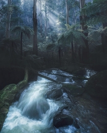 Lush forest valley in the Dandenongs national park Australia