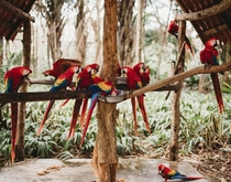 Macaw Sanctuary in Costa Rica