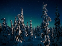 Magical candle spruces of Finland  photo by Peter Essick