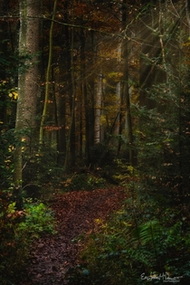 Magical forest path in morning light --- Schnbuch Germany ---