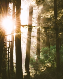 Magical light in the coastal forests of Oregon taken last night near Cannon Beach